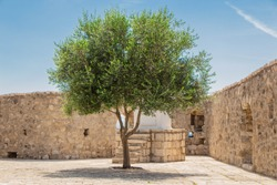 a lone olive tree, a tree in the castle, a light and soft picture.