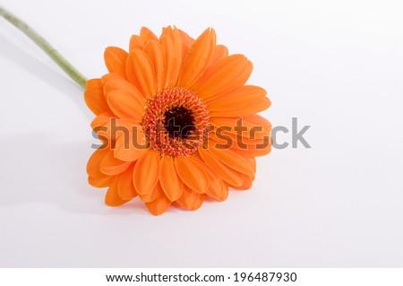 A lone orange flower with a black and orange pistil.