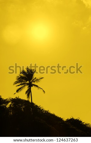 A lone palm tree silhouette against sky. Yellow toned.