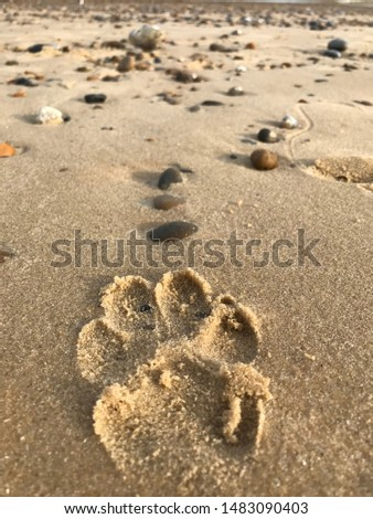 A lone paw, guided by the stones. The smell the noise the taste of the beach, the smell of wet dog, the noise of the sea and the dog barking! The tase of the salt in the air.