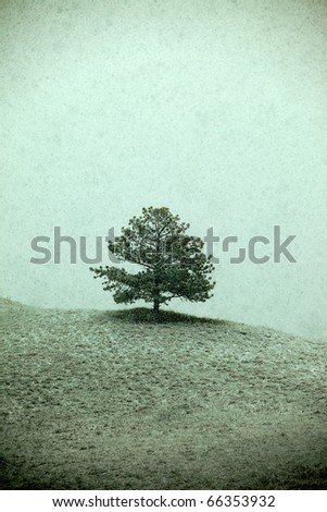 A lone Ponderosa pine sites on the precipice of a hill as snow falls.