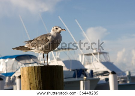A lone seagull rests on a piling at a marina with fishing boats in the background.
