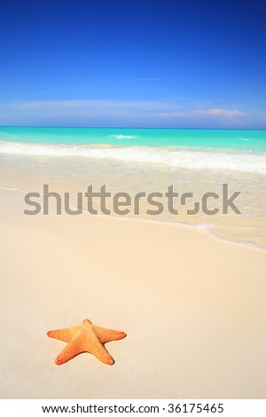A lone starfish on stunning white sand tropical beach
