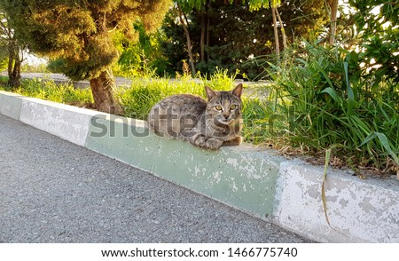 A lone tabby cat resting on the kerb