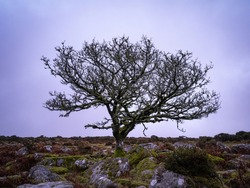A Lone Tree Against A Grey Background In Winter