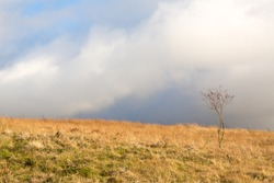 A lone tree eeks out an existance on the Pennine Fell