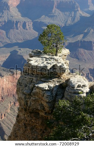 A lone tree grows on a rocky outcrop overlooking the Grand Canyon in Arizona