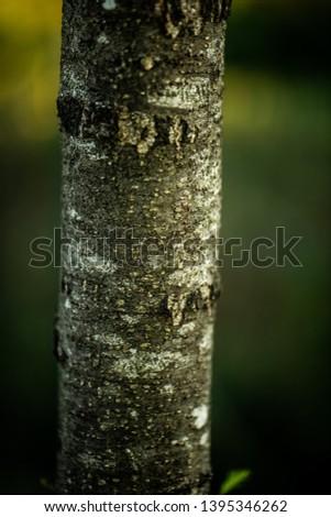 A lone tree on a lone field