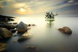 A lone tree partially submerged in the water during sunset . Long exposure . Image contain certain grain or noise ( the tree has a little movement because of long exposure effect )