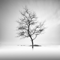 A lone tree partially submerged in the water . Long Exposure black and white.