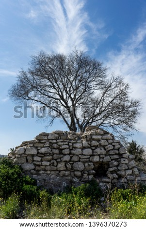 A lone wall and a lone tree