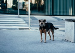 A lonely black and brown street dog standing next to a bench during daytime