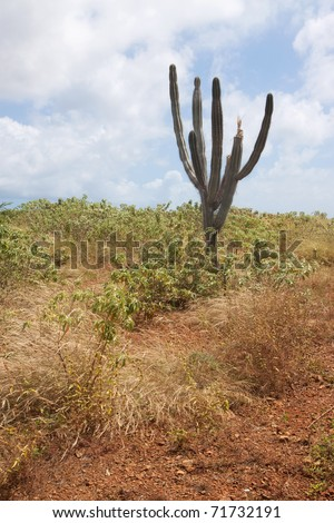 A lonely cactus on the island of Curacao.