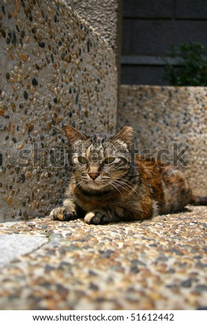 A lonely cat which is sitting on the ground