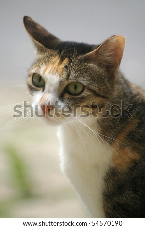 A lonely cat with sharp eyesight