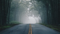 A lonely foggy road cutting through a thick and quiet wood.