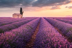 A lonely house into lavender fields near Valensole, Provence, France