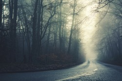 A lonely looking road in the damp foggy forest.