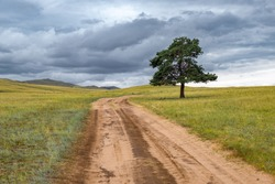A lonely tree by the road against the backdrop of endless fields and hills on cloudy summer day on Olkhon island, Russia