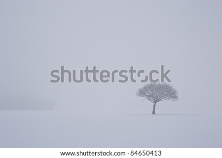 stock-photo-a-lonely-tree-enduring-the-cold-84650413.jpg