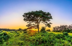 A lonely tree in a field at dawn. Nature at dawn. Sunrise in nature scene. Lonely tree at dawn