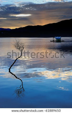 a lonely tree in sun moon lake at Taiwan
