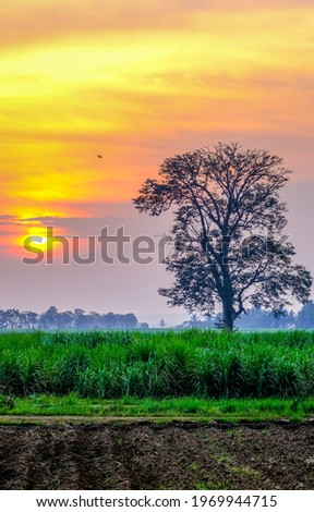 A lonely tree in the early morning light of dawn. Easrly morning nature at dawn. Sunrise in early morning
