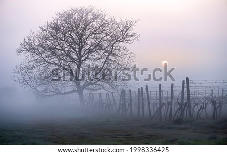A lonely tree in the morning fog. Tree in foggy morning. Morning fog view. Lovely tree at fence in foggy morning