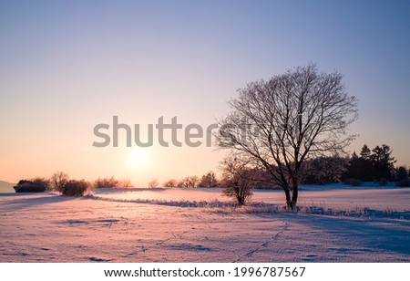 A lonely tree on a winter morning at dawn. Winter snow sunrise. Winter nature at dawn. Winter snow tree at dawn