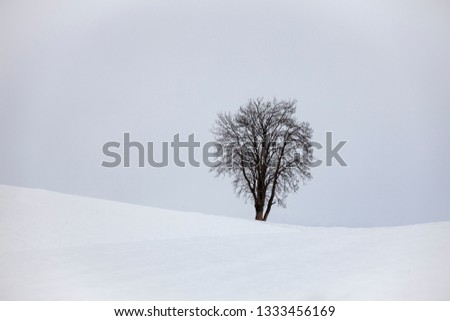 a lonely tree on the horizon of a snowcoverd field. Symbol of seclusion