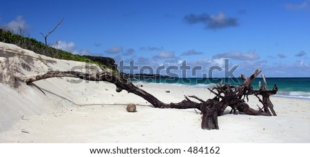 A lonely tree trunk on Crane Beach / Barbados ...