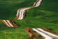 A long and winding rural path crosses the green hills in Tuscany, Italy.