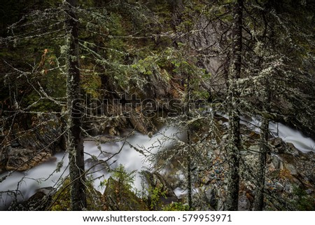 A long exposure of an impetuous mountain creek cutting through the rock in the wilderness of deep ancient forest of Northern Urals, Russia taken through the trees covered in old man's beard moss #579953971