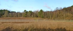 A long fence made of metal mesh separates the forest and the construction site of the secret state facility. Panoramic collage from several outdoor photos