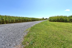 A long gravel drive splits two cornfields as far as the eye can see. Blue summer skies above.  Green grass and farmlands below.  A bright, sunny day.