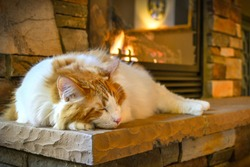 A long hair, orange and white Maine Coon cat sleeps on a hearth in front of a cozy gas fireplace with stone surround.