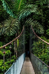 A long magnificent hanging bridge in the middle of a tropical rain forest. Green foliage of beautiful palm trees can be seen.