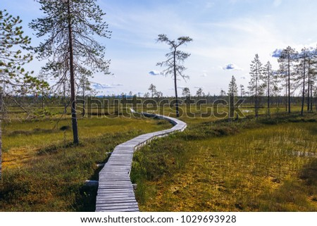 A long narrow boardwalk winds through a swampy low land area in Northern Finlands Pyha-Luosto National Park. Pine trees a scattered throughout the swampy field.  #1029693928
