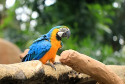 a long-tailed macaw parrot with colorful feathers