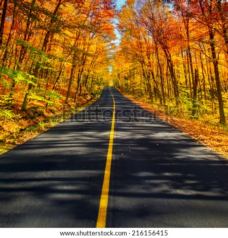 A long two lane rural road running through a colorful vibrant treed corridor landscape during the autumn season.  #216156415