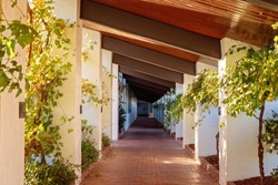 A long walkway with white columns and timber overhead beams, with grape vines growing on either side