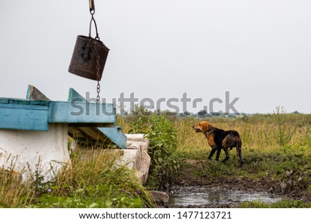 A lost hound found a well in the steppe #1477123721