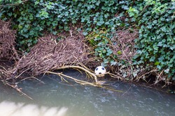 A lost or discarded childrens plastic football caught in debris at the edge of a small river