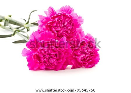 a lot of beautiful pink carnations on a white background
