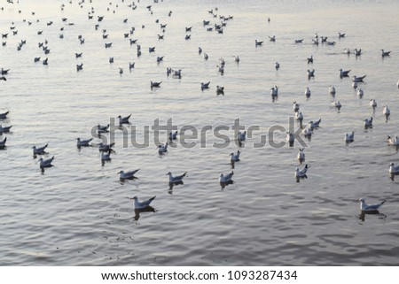 A lot of birds on the lake. #1093287434