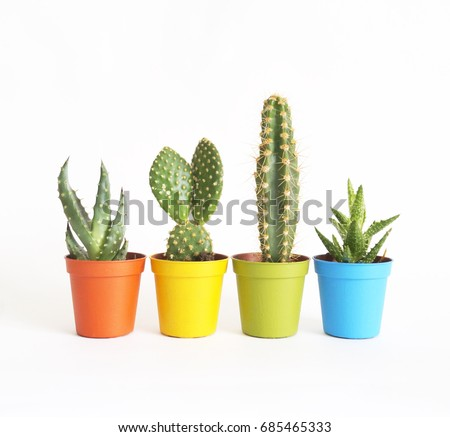 A lot of cacti in colorful pots. White background. Color. Decor for child's room. Advertising. The colors of the rainbow. Cactus. A succulent. Flower pots in a row.