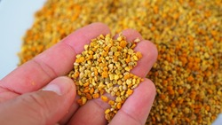 a lot of close-up flower pollen,fresh bee pollen, natural vitamin source, empowering bee pollen,