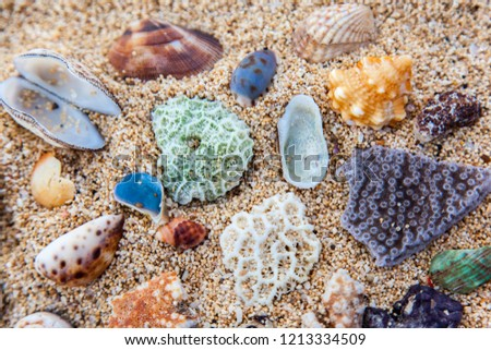 A lot of colorful (red, white, violet,white, orange, green, blue,  pink) corals, sponges, seashells are on the yellow sandy beach - beautiful picture pattern, wallpaper