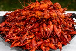 A lot of cooked signal crayfish, Pacifastacus leniusculus, ready to eat