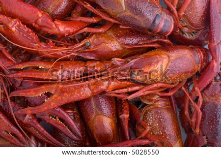A lot of delicious cooked crayfishes